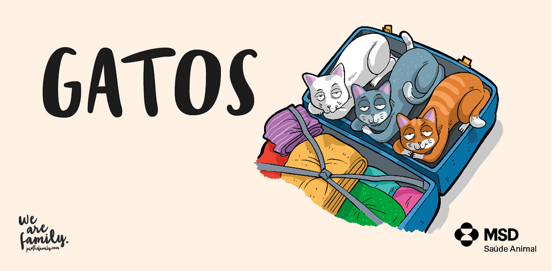 doodles-gatos-header
