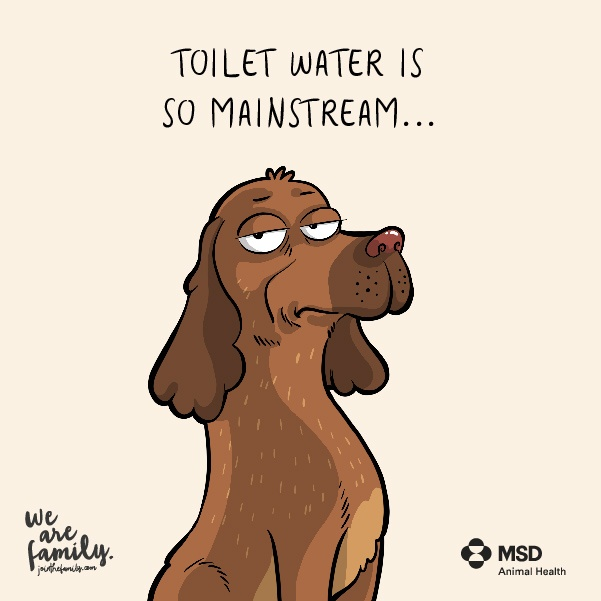 Toilet is Mainstream