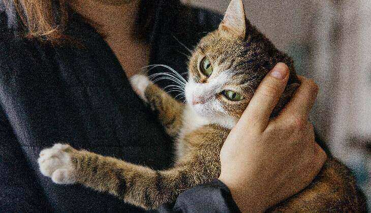 Are cats happy when they purr?