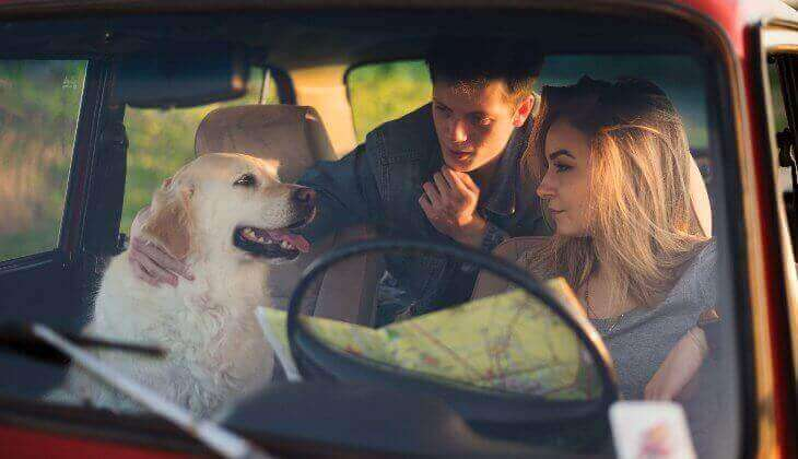 travelling-with-dog-in-car