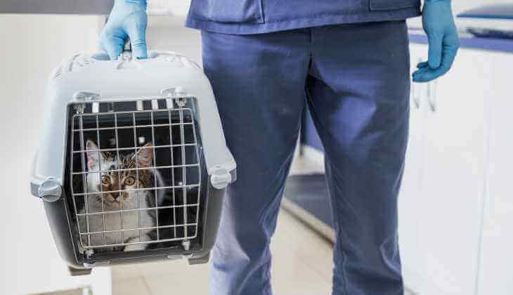 Visit vet with a cat in a cage carrier