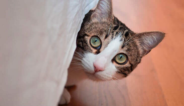 Signs of stress fear in cats