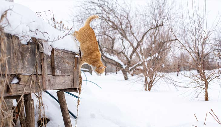 cat in the snow jumping