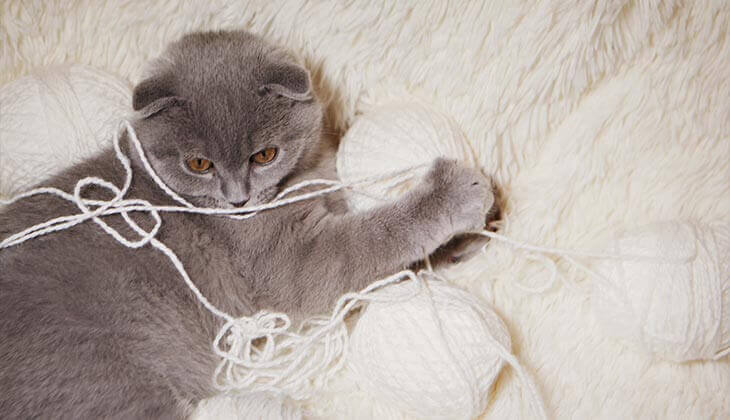 exercise with wool cat